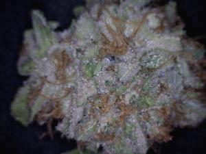 Boost Near Me >> Berry Blast Medical Marijuana Reviews - THC Finder