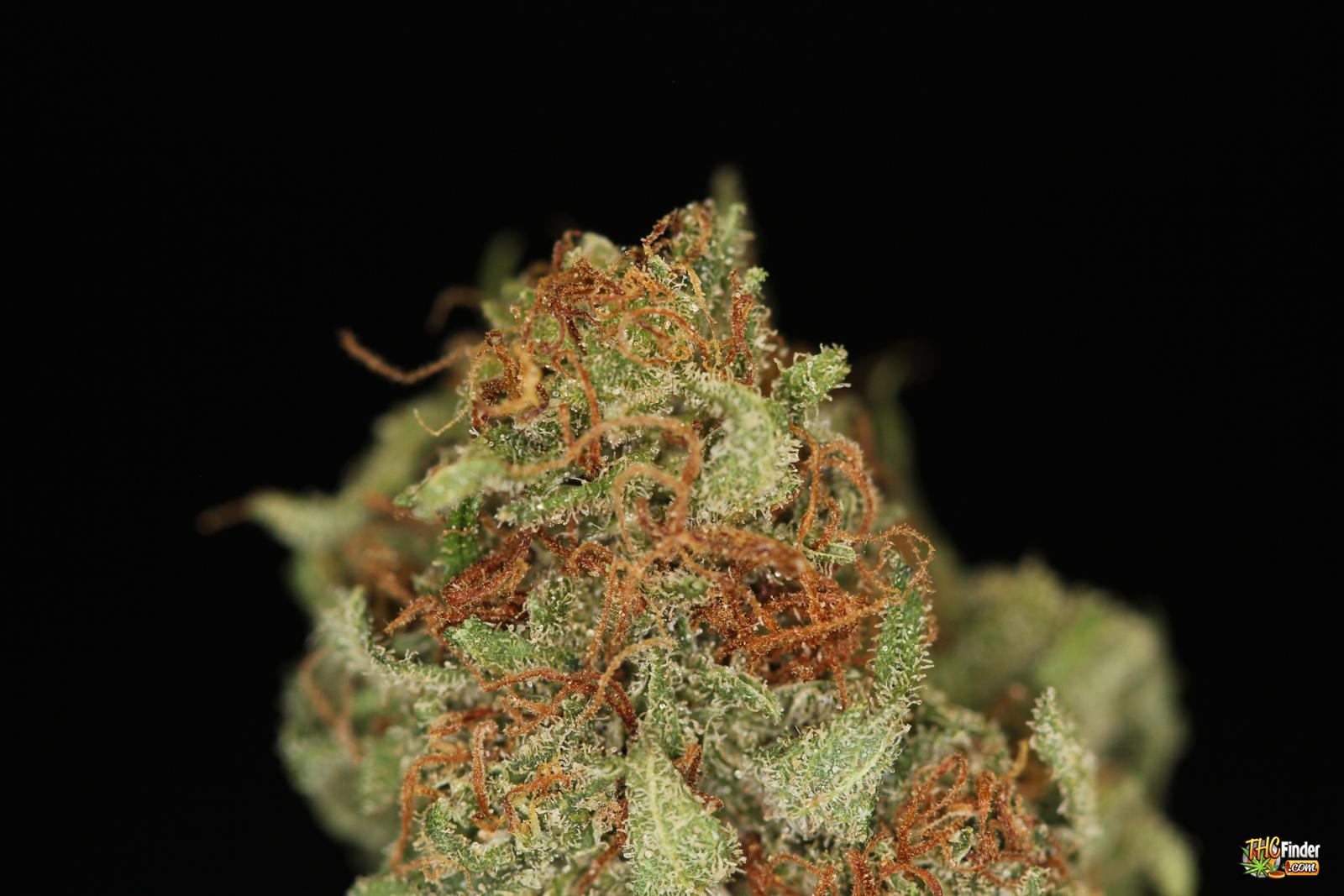 AK47 Weed | Nugs Marijuana Blog | THC Finder ...