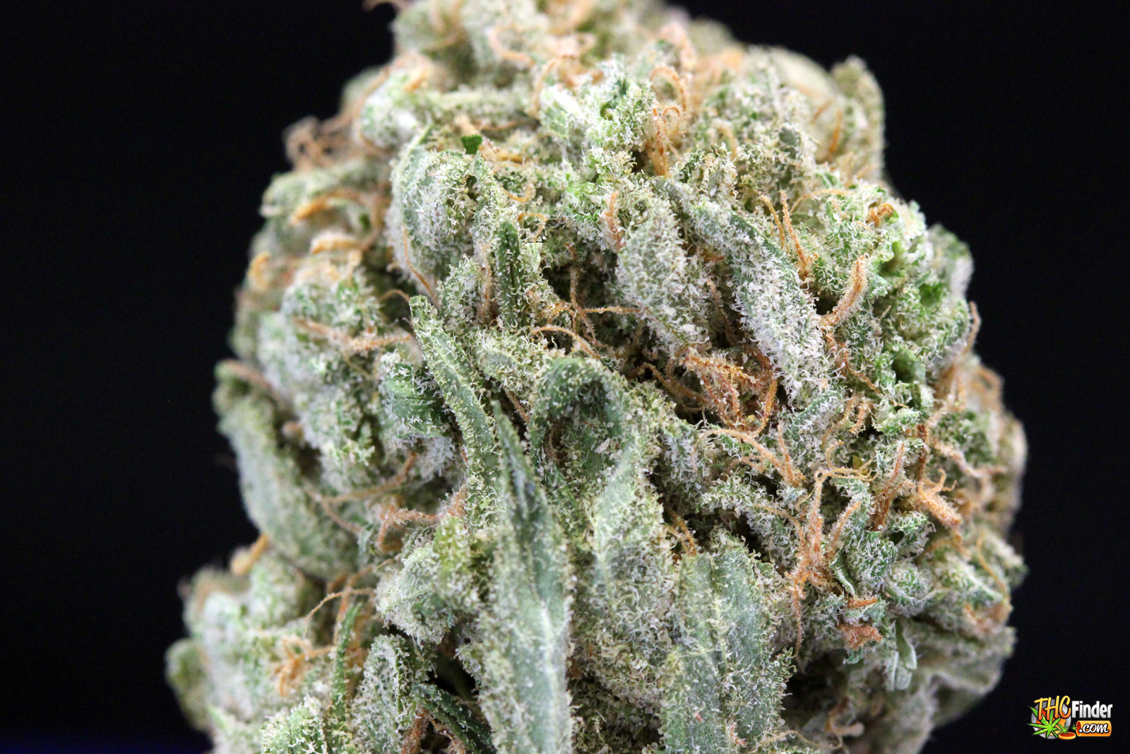5 Best Marijuana Strains For Headache Relief Hawaiian-dream-closeup-shot-hawaiian-dream-medical-bud-thcfinder-2930