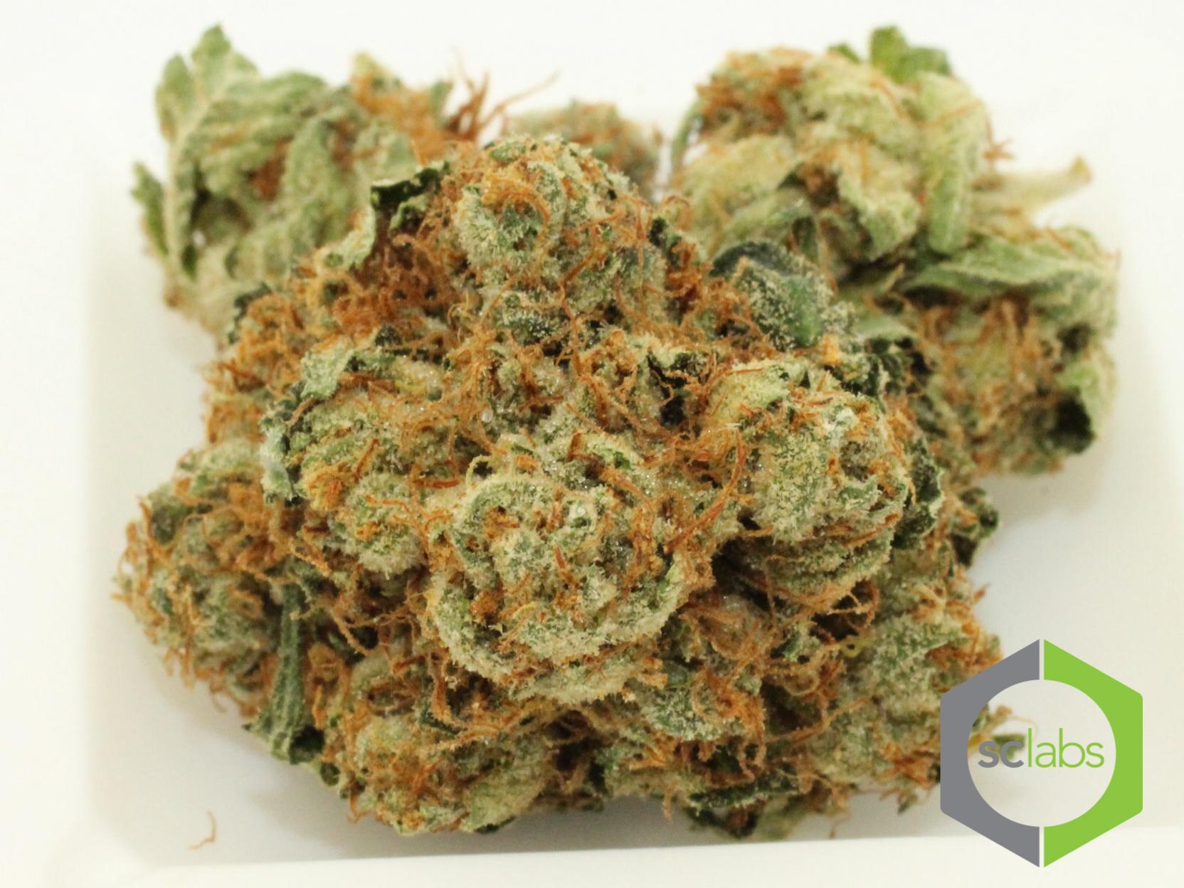 quiver-og-cannabis