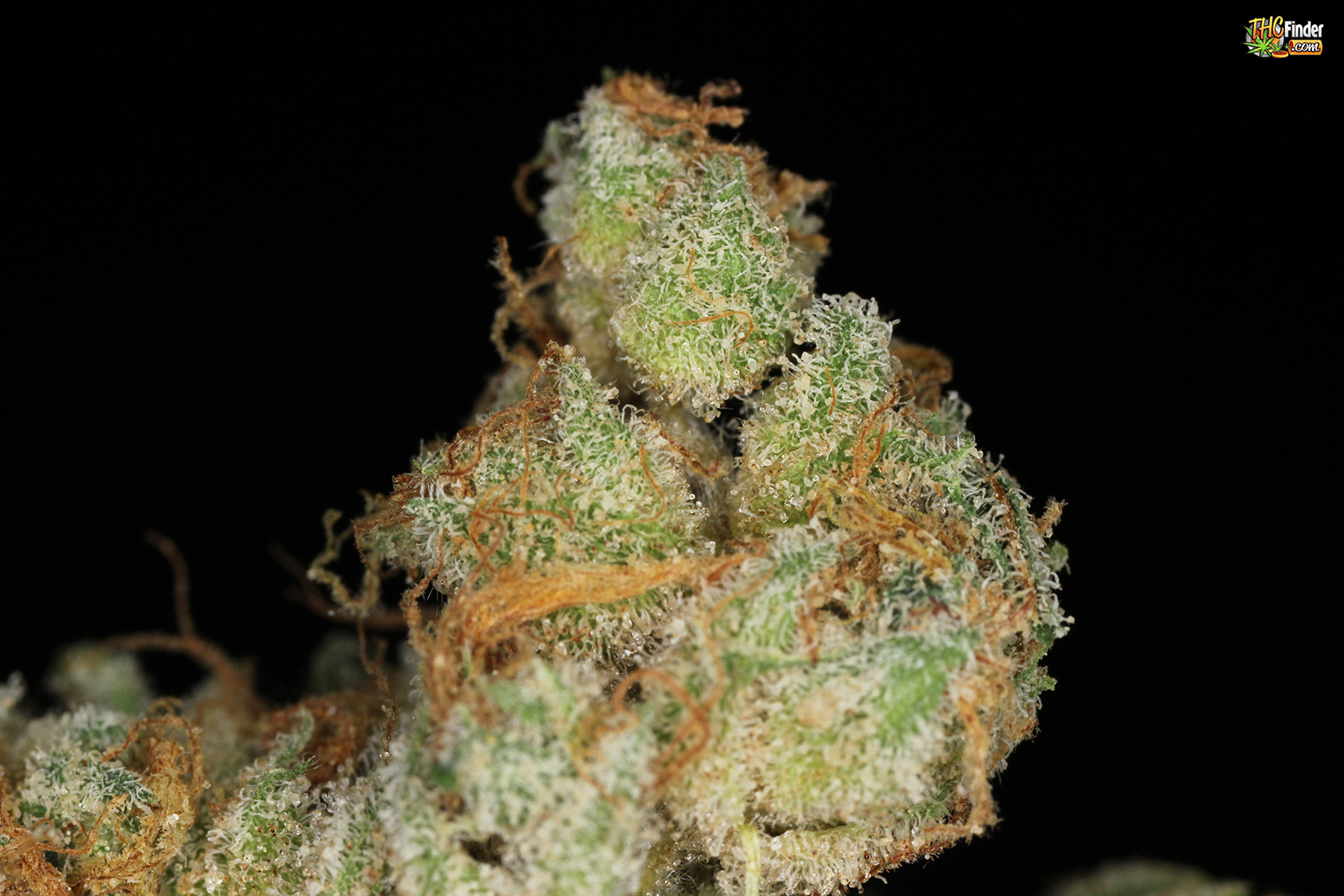 ak47-medical-cannabis-strain