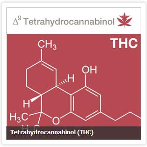 are-you-allergic-to-thc