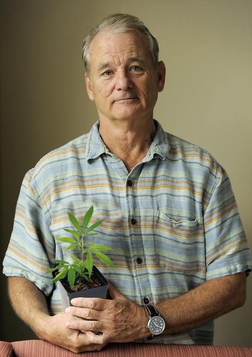 bill-murray-weed