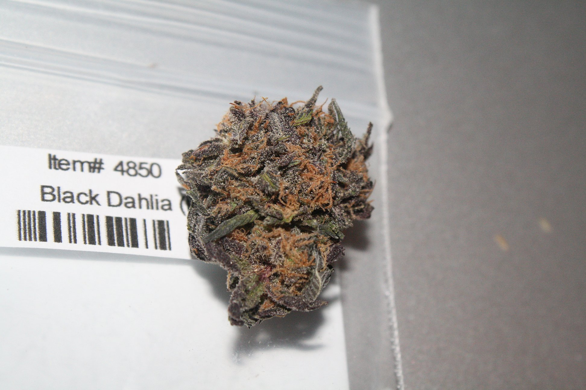black-dahlia-weed