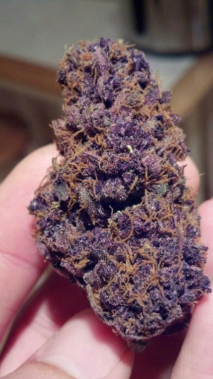 black-domina-weed
