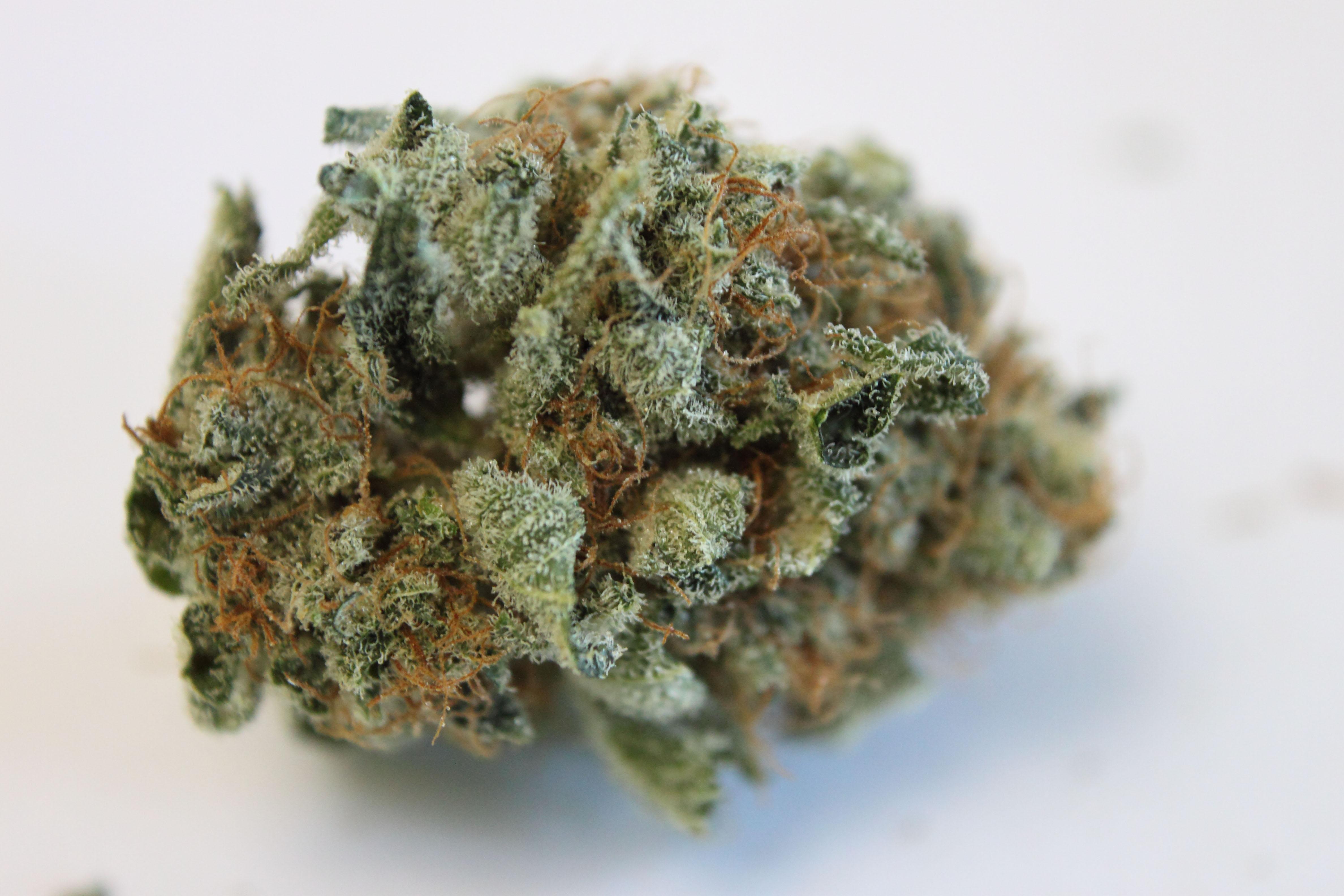 blackberry weed - photo #38