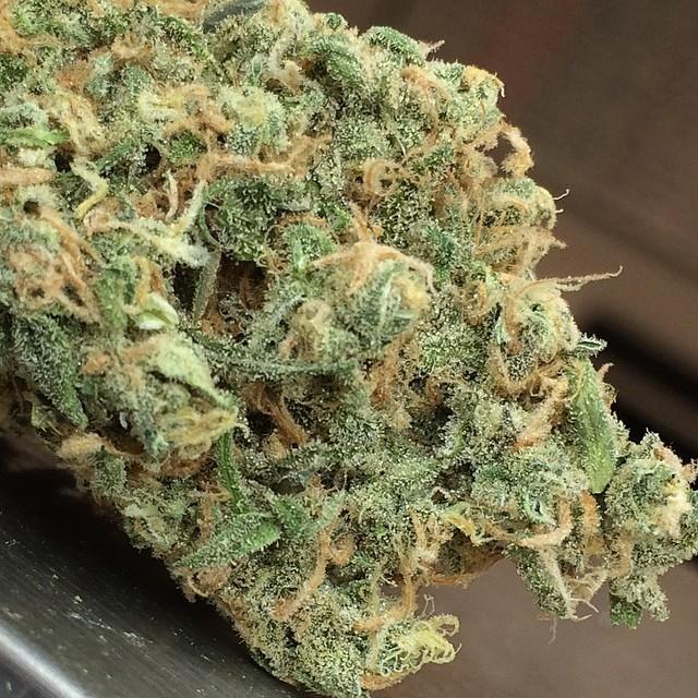 blue-haze-weed