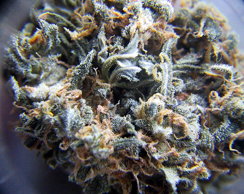 http://www.thcfinder.com/uploads/files/blueberry-marijuana-3.jpg