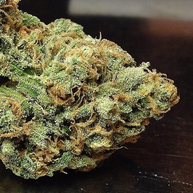 blue-jack-weed