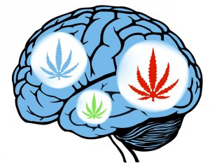 brain-and-marijuana-usage