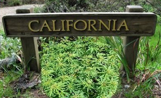 how to start a cannabis club in california