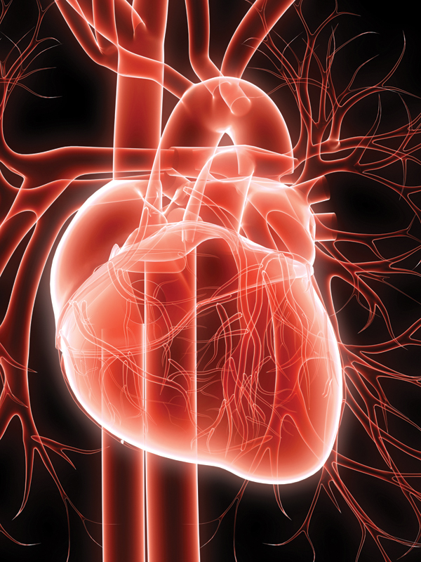 cardiac-help-from-cannabanoids