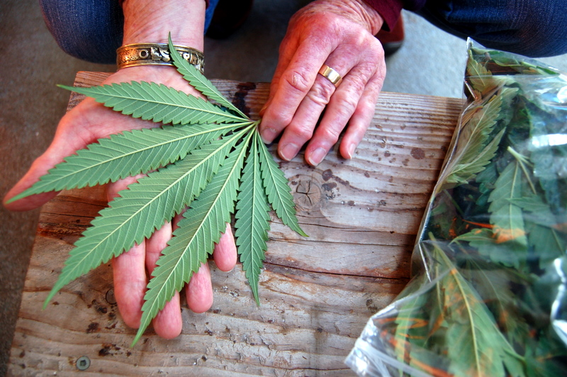 cannabis-can-treat-osteoarthritis