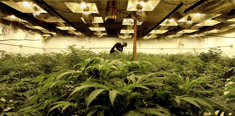 cannabis-balancing