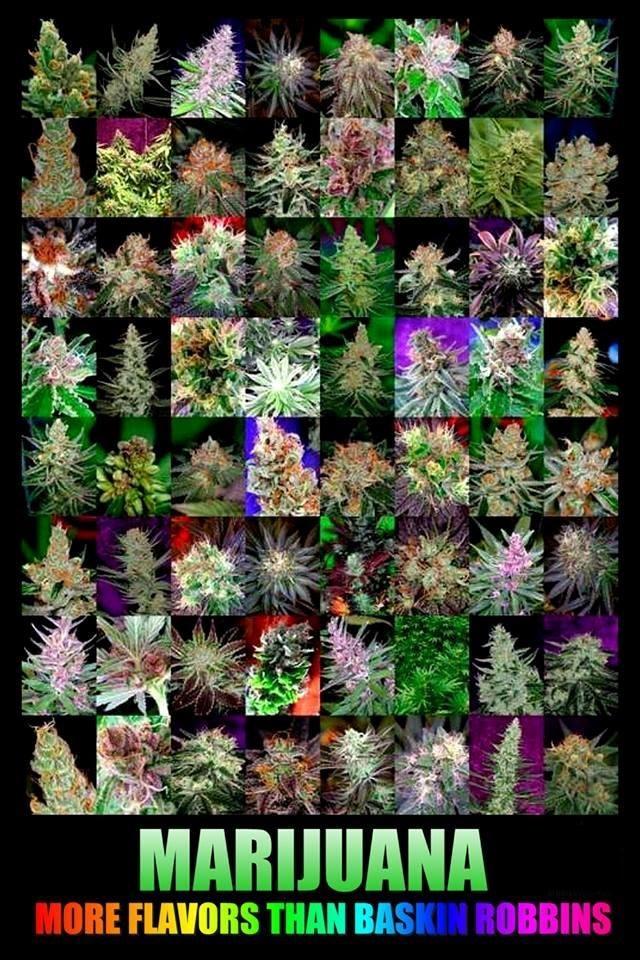 cannabis-flavors
