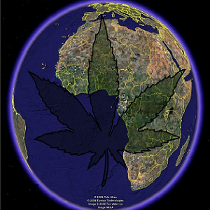 cannabis-most-used-drug-worldwide-mj