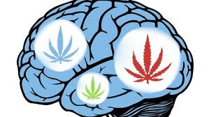 cannabis-helps-cog-abilities