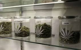 children-taken-for-marijuana