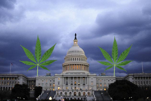 dc-decrim-cannabis