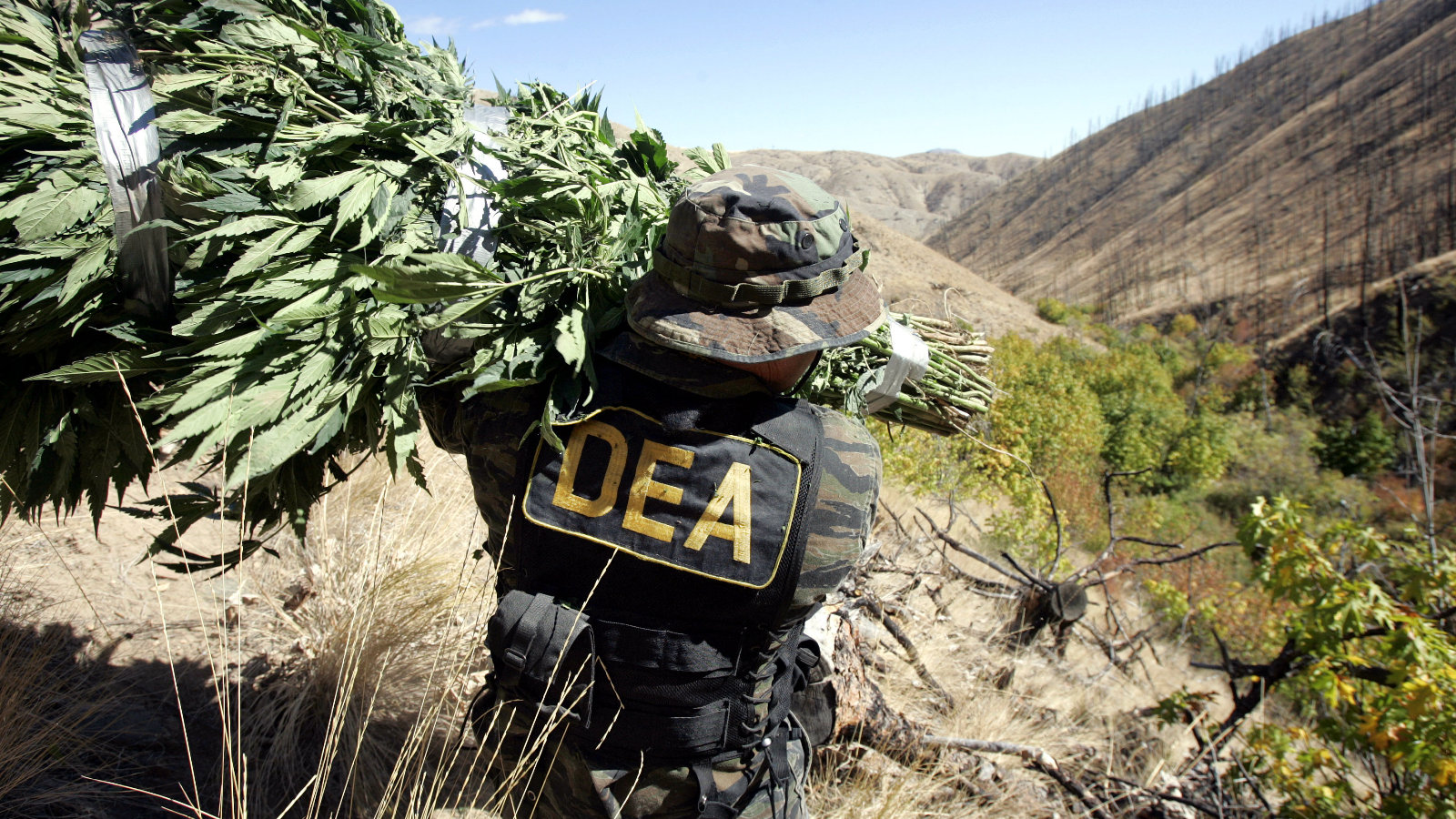 dea-obstructing-cannabis-science-for-years