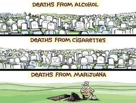 deaths-from-marijuana