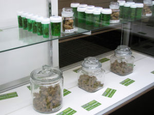 dispensary-opens-in-havasu-city