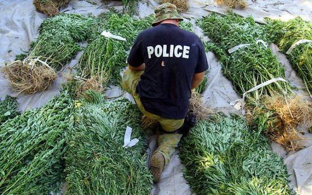 cops-have-to-return-mmj-plants