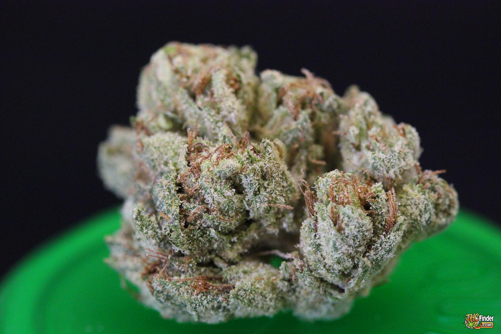 dr-death-og-weed