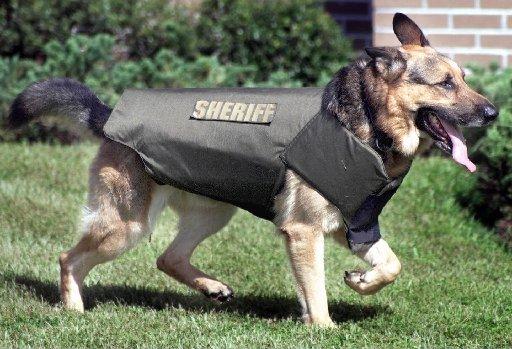 drug-sniffing-dog
