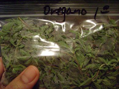 Oregano Vs Weed | www.pixshark.com - Images Galleries With ...