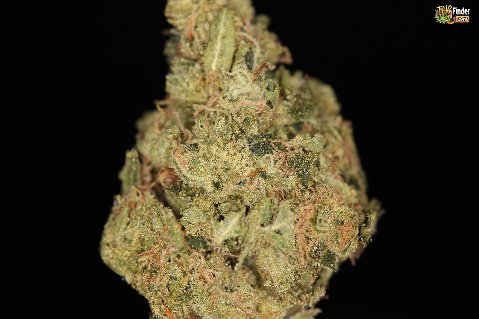 ferrari-og-weed-cannabis