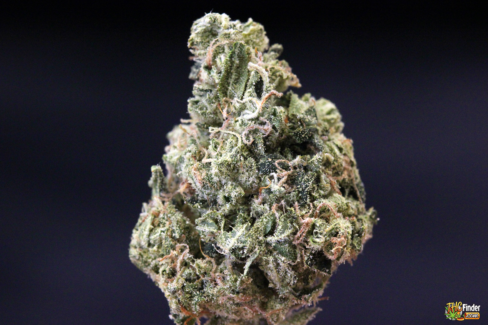 ferrari-og-weed