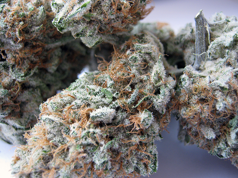 G13 Strain Review and pics – THC Finder