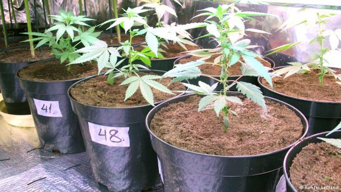german-court-says-you-can-grow-marijuana