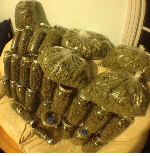 got-bud-weed