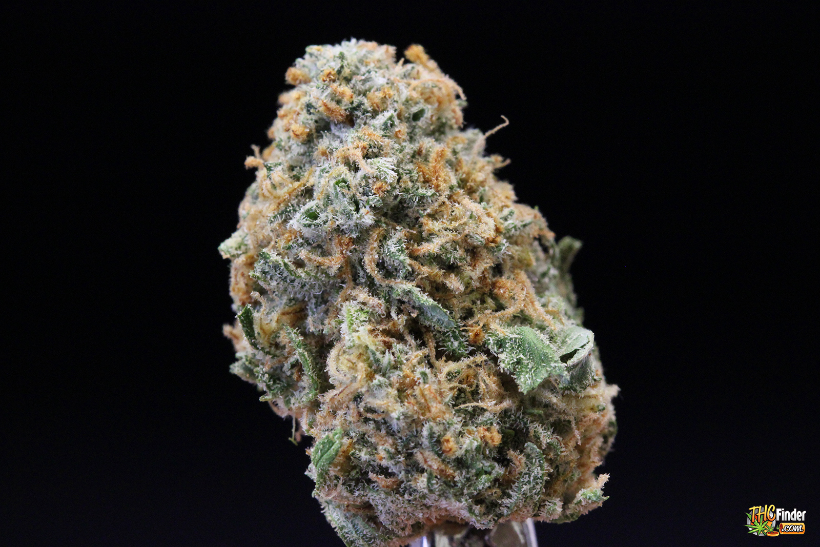 green-dream-bud