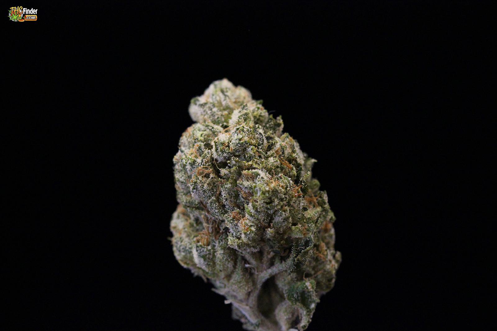 greenkiss-og-weed