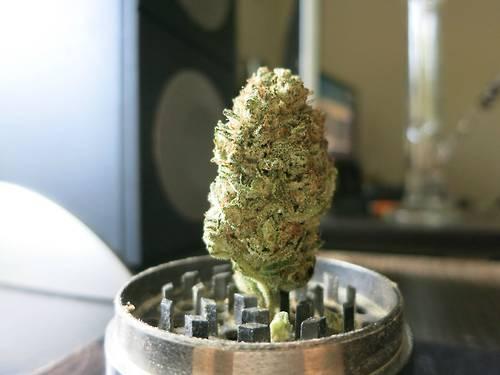 green-queen-weed