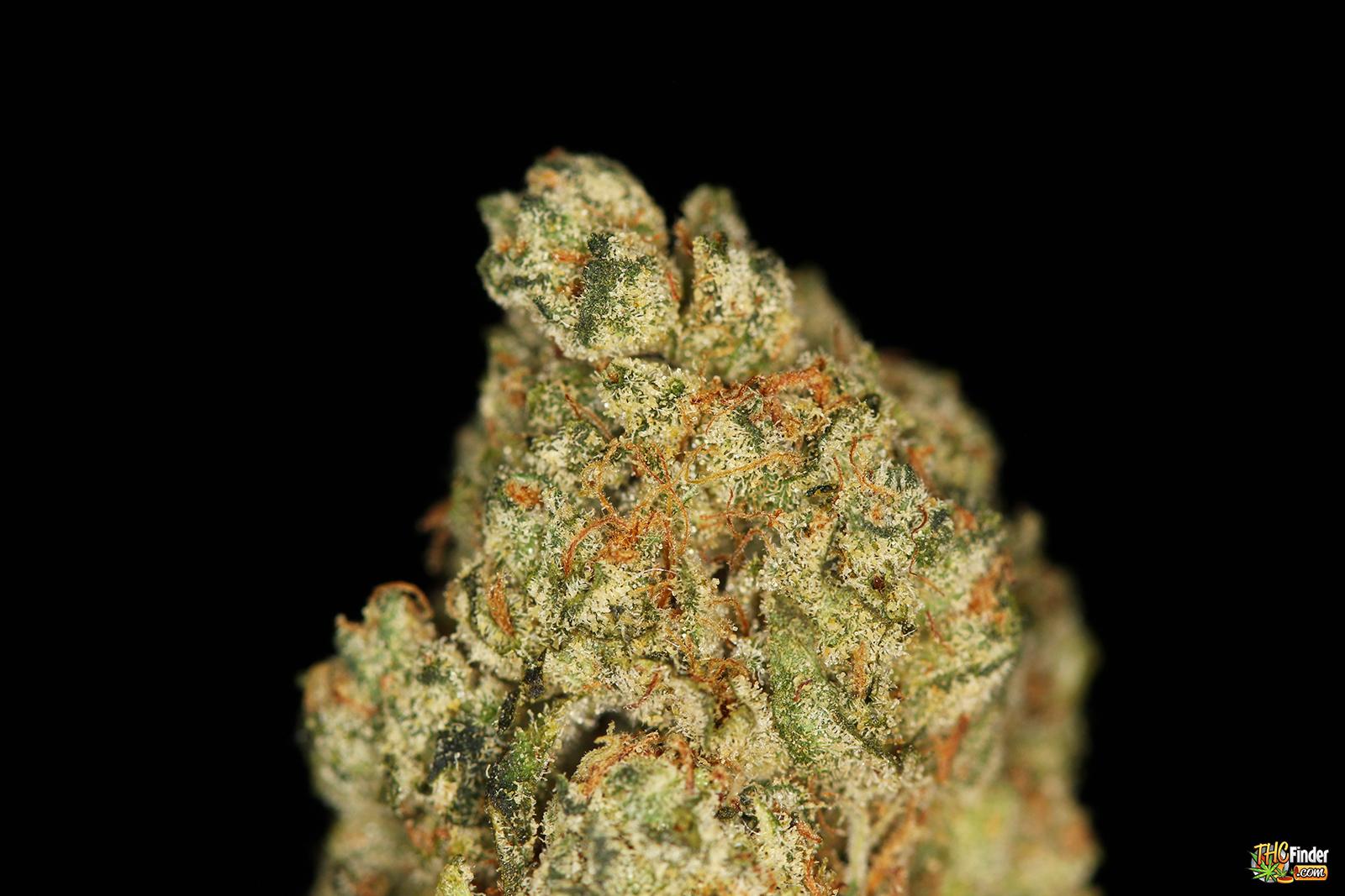 greenkissog-marijuana