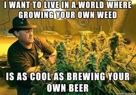 growing-your-own-weed