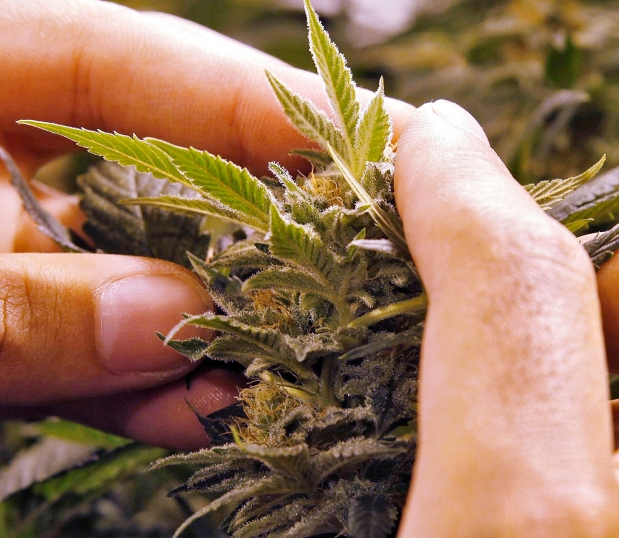 legalizing marijuana will pose a bigger problems for america The corrections corporation of america (cca) said that cannabis legalization would to oppose the legalization of marijuana because fewer people big business.