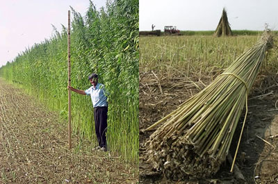 hemp-production-oregon