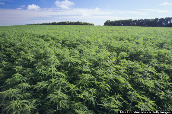 hemp-helps-the-environment