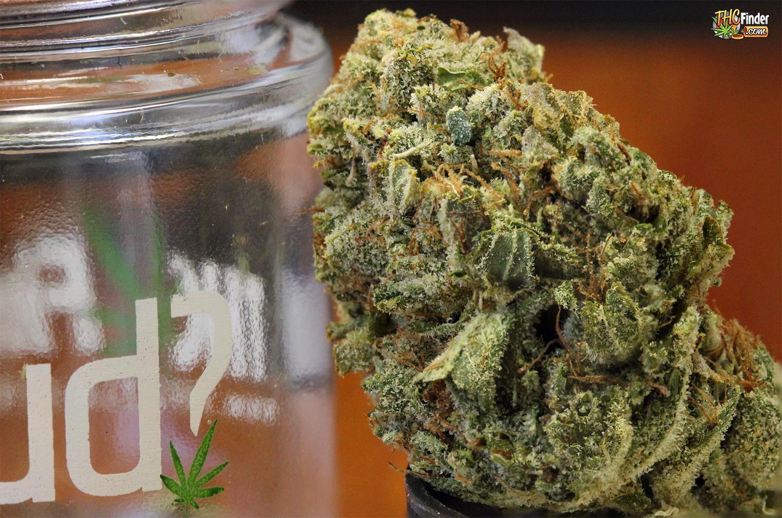 hennessey-og-weed