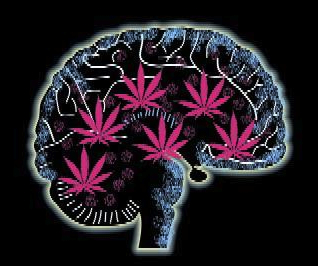 increase-cannabis-potency