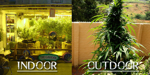 indoor-vs-outdoor-cannabis