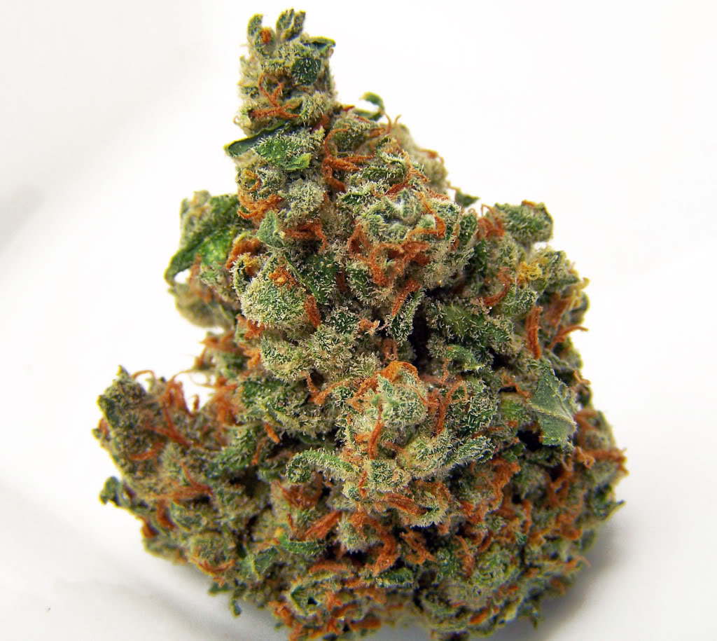 jacks-haze-weed