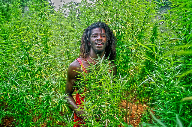 jamaica-marijuana-legalization