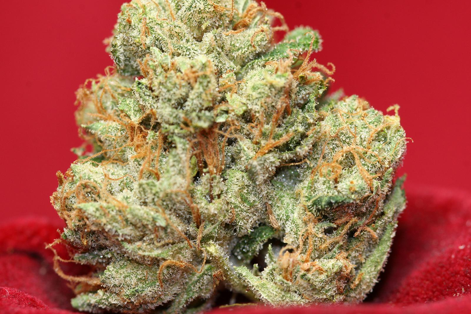 jupiter-weed