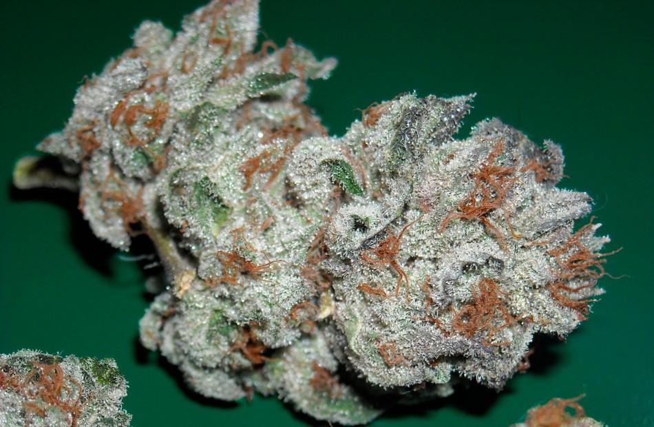 king-kong-weed